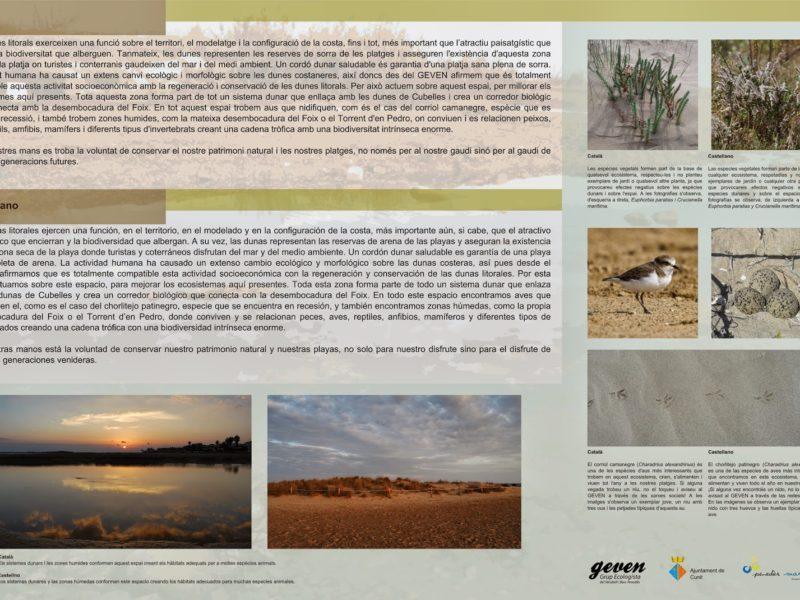 Geven, Grup Ecologista del Vendrell i Baix Penedès, medi ambient, ecologistes, ecologisme, les madrigueres, corriol camanegre, natura, medi ambient, animals, platja, espais naturals, baix penedès, AIGUAMOLL