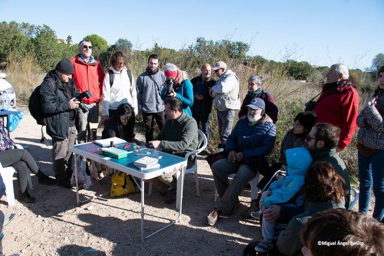 Geven, Grup Ecologista del Vendrell i Baix Penedès, medi ambient, ecologistes, ecologisme, les madrigueres, corriol camanegre, natura, animals, platja, espais naturals, baix penedès, anellament, micromamifers,