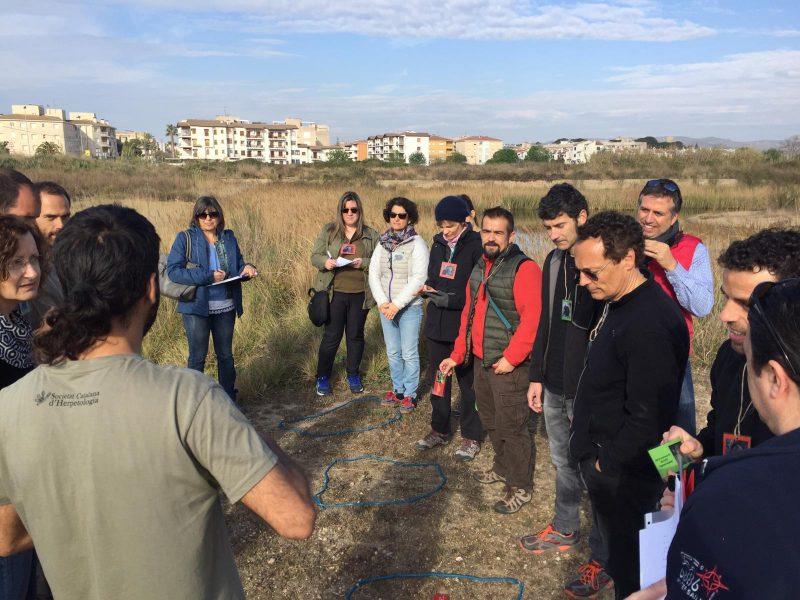 Geven, Grup Ecologista del Vendrell i Baix Penedès, medi ambient, ecologistes, ecologisme, les madrigueres, corriol camanegre, natura, animals, platja, espais naturals, baix penedès,
