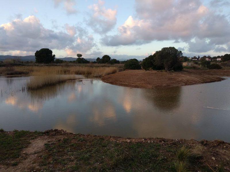 Geven, Grup Ecologista del Vendrell i Baix Penedès, medi ambient, ecologistes, ecologisme, les madrigueres, corriol camanegre, natura, medi ambient, animals, platja, espais naturals, baix penedès, AIGUAMOLLS,