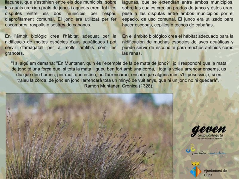 Plafò divulgatiu sobre la flora de la platja de Cunit