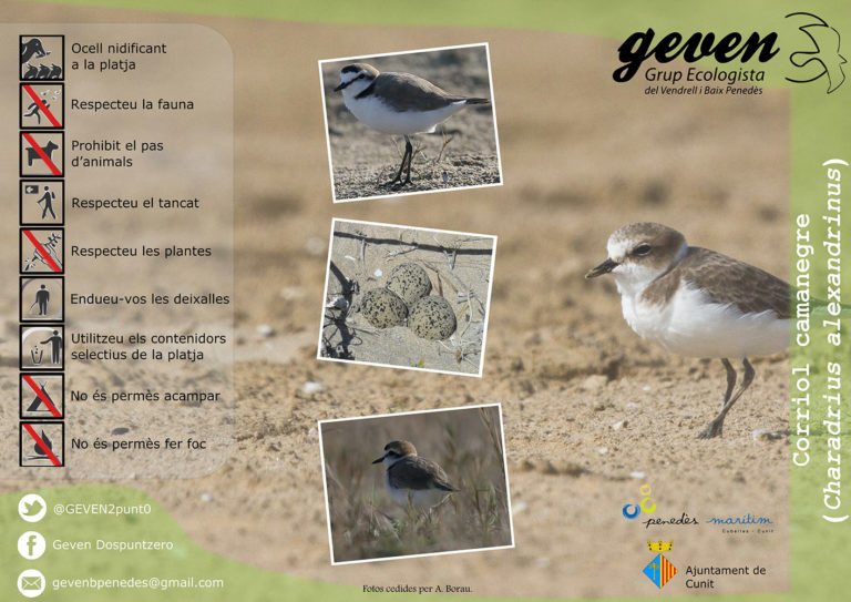 Tríptic sobre el corriol camanegre a Cunit